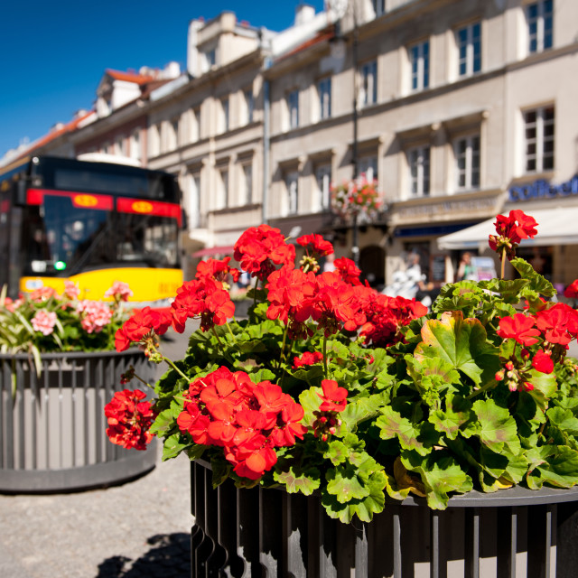 """Nowy Swiat street and red geranium"" stock image"