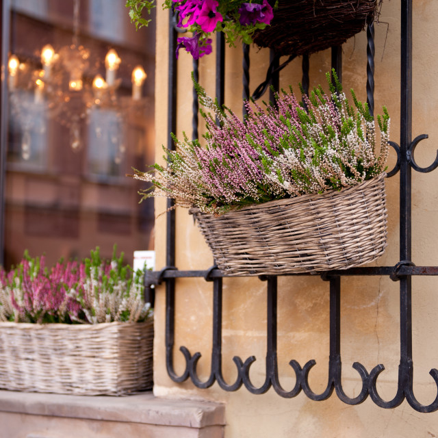 """Blooming heather in wicker basket"" stock image"