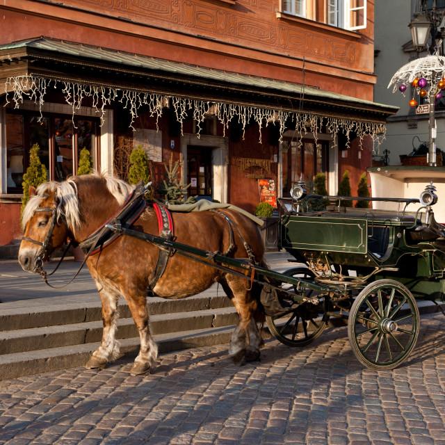 """Old horse and green britzka"" stock image"