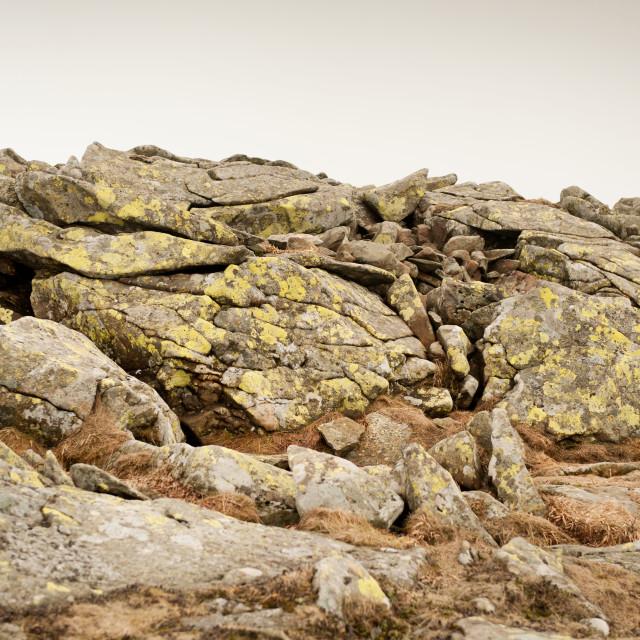 """Lichen on stones slabs"" stock image"
