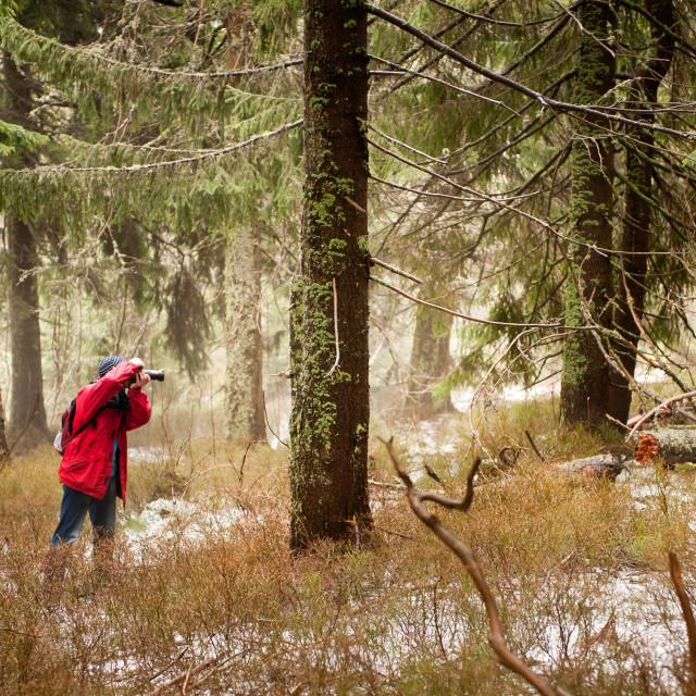"""""""Taking photo of woods"""" stock image"""
