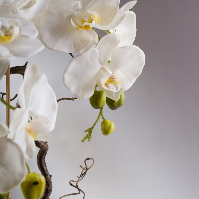 """Detail of fake white orchids"" stock image"