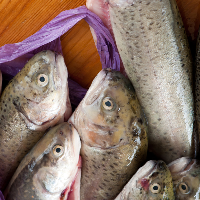 """Fresh raw caught trouts fish"" stock image"