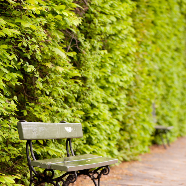 """""""hedgerow and empty bench"""" stock image"""