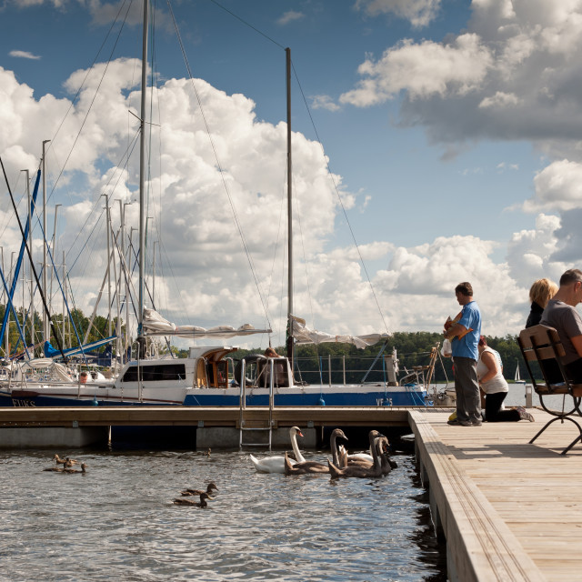 """Swans family and boats moored"" stock image"