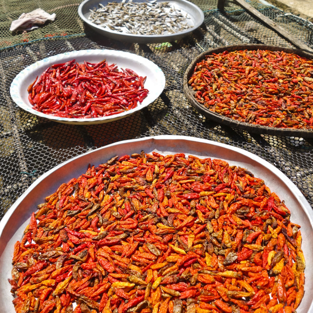 """Sun dried chili peppers"" stock image"