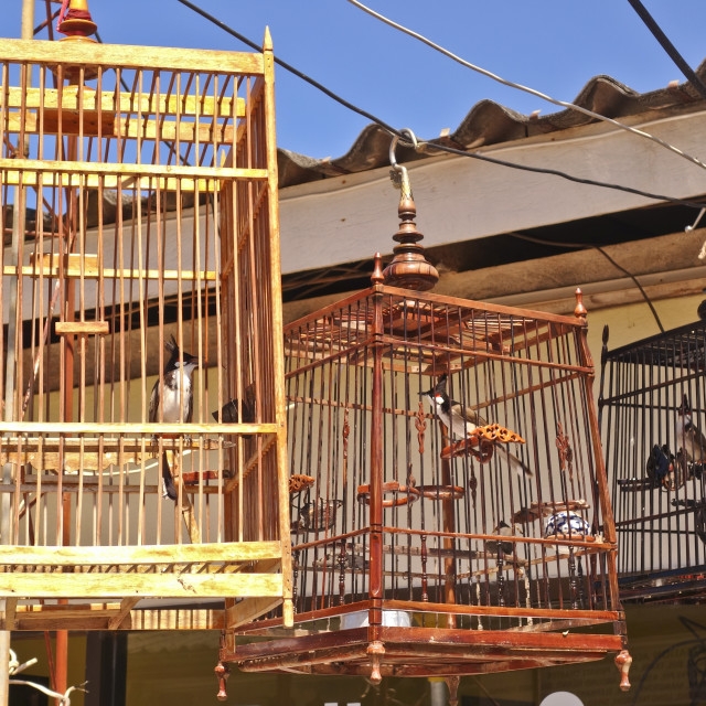 """Wooden birdcages with red-whiskered bulbul"" stock image"