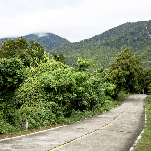 """Jungle road"" stock image"