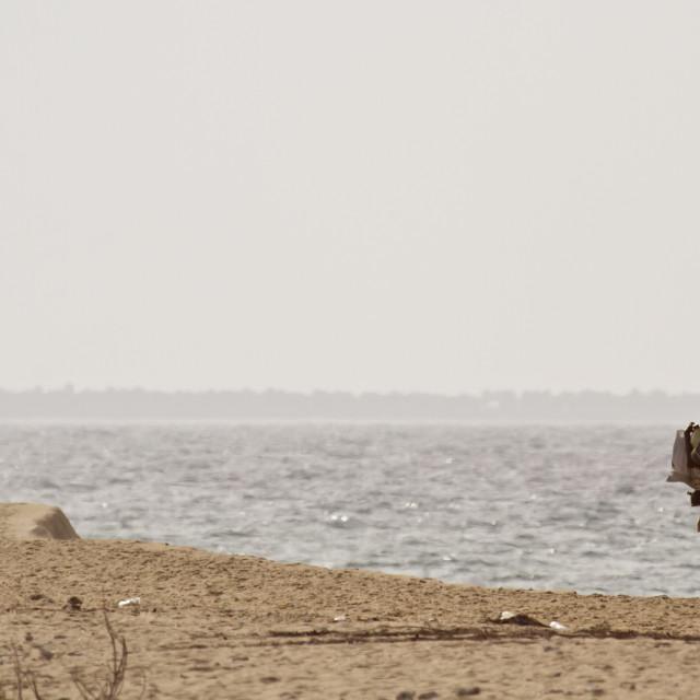 """Traditional fisherman walkin on Palameenmadu beach, Sri Lanka"" stock image"