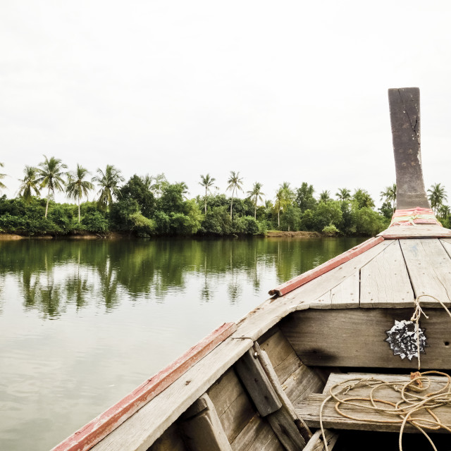 """Tip of Long-tail boat crossing Mangrove forest"" stock image"