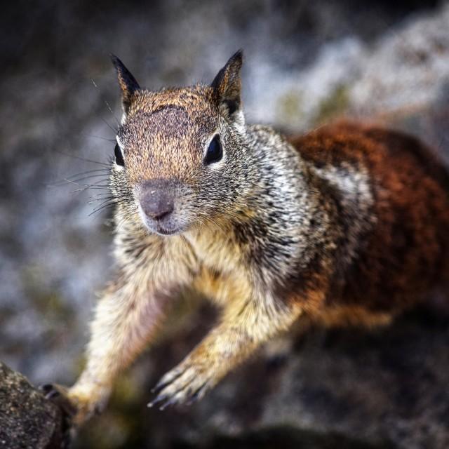 """""""Squirrel Portrait"""" stock image"""