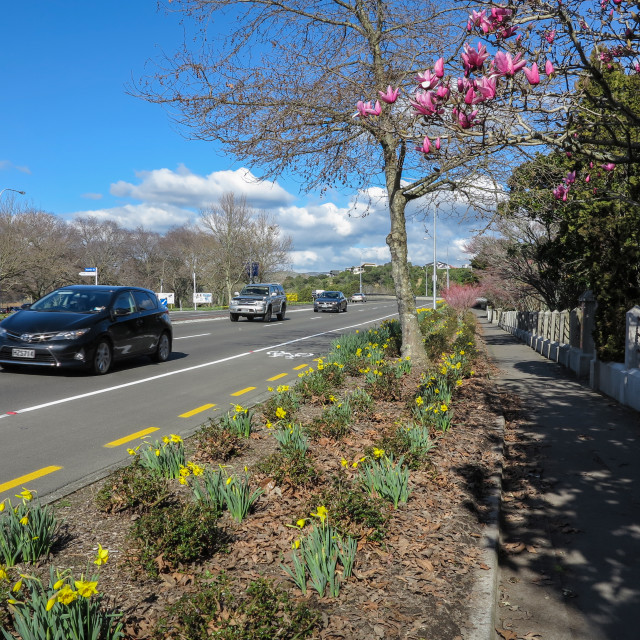 """""""Urban road with Spring flowers."""" stock image"""