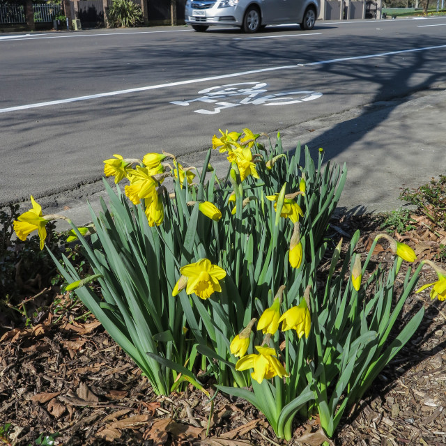 """Roadside flowers in Spring"" stock image"