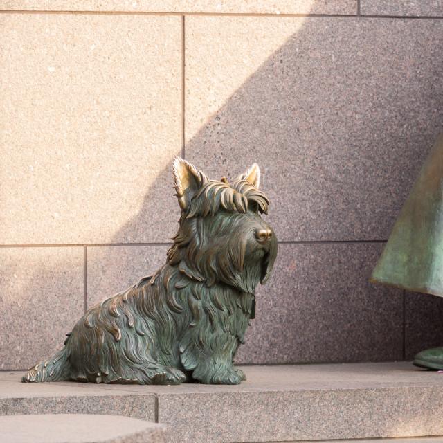 """Pet dog at Roosevelt memorial Washington DC"" stock image"