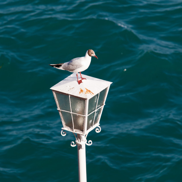 """""""Seagull on lamp"""" stock image"""