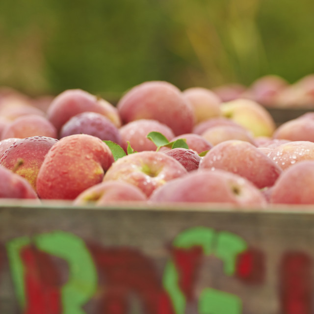 """""""Apples in crate"""" stock image"""
