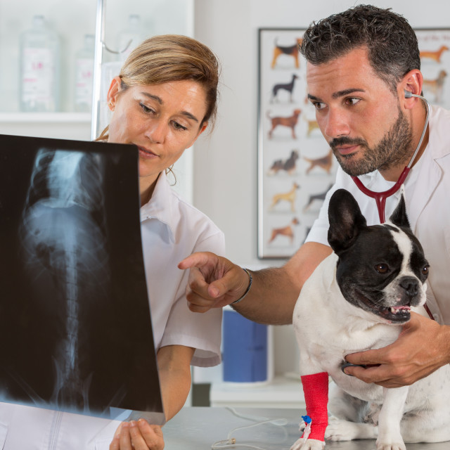 """""""Couple reviewing veterinary radiography"""" stock image"""
