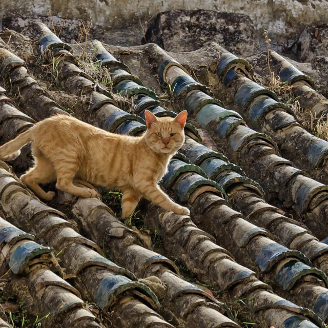 """""""ONE-EYED CAT"""" stock image"""