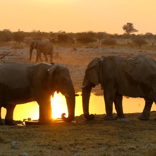 """""""Elephants Etosha National park"""" stock image"""