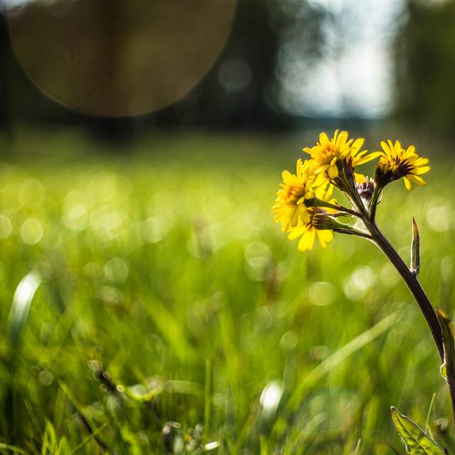 """Beatiful flower"" stock image"