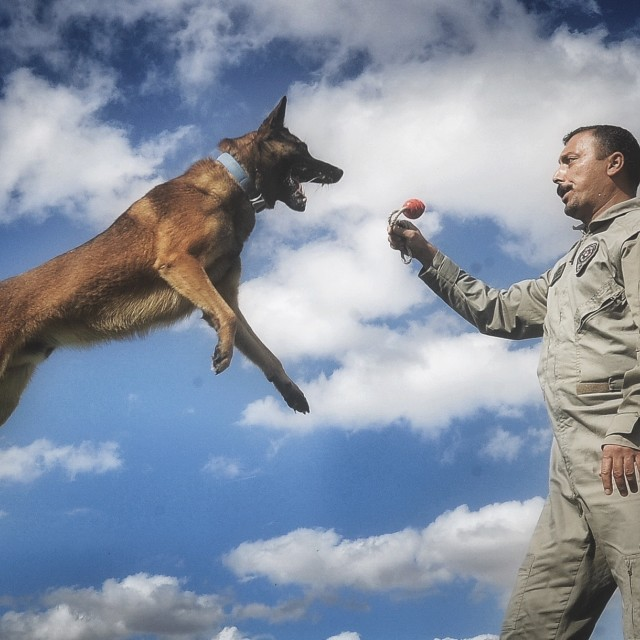"""Flying Dog"" stock image"