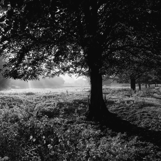 """Early Autumn Monochrome Light"" stock image"