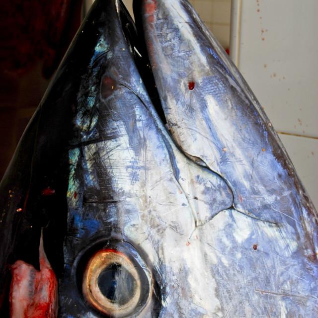 """Tuna head on spanish market"" stock image"