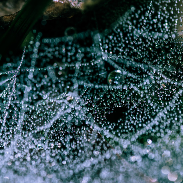 """Dew on spider's web"" stock image"