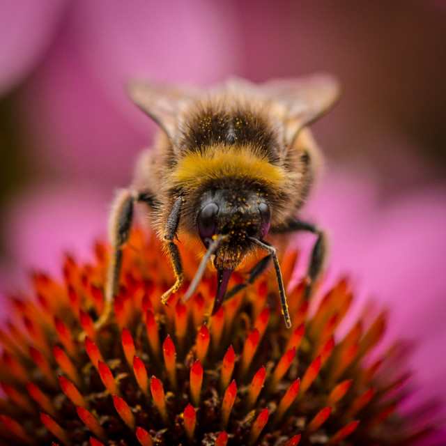 """""""Busy Bees"""" stock image"""