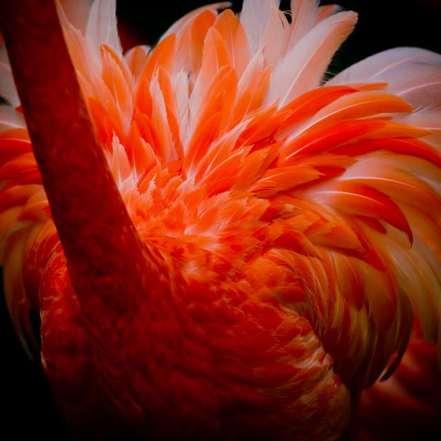 """""""Flamingo feathers"""" stock image"""