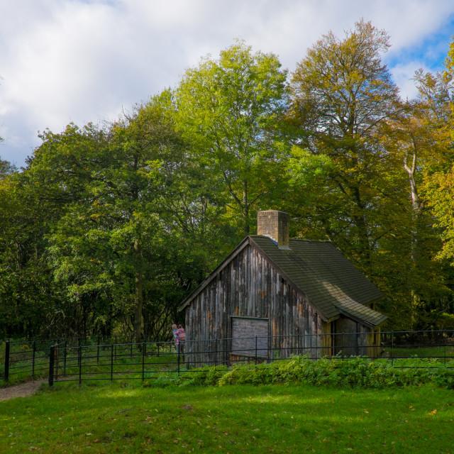 """""""Woodland cabin"""" stock image"""
