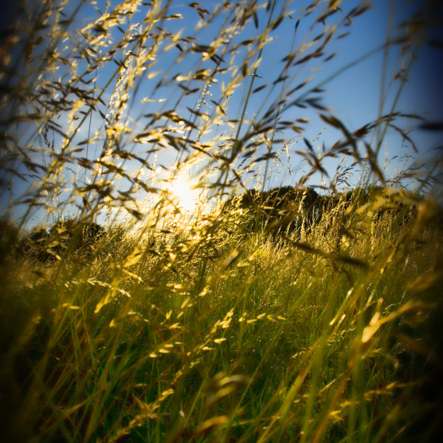 """Long Grass"" stock image"