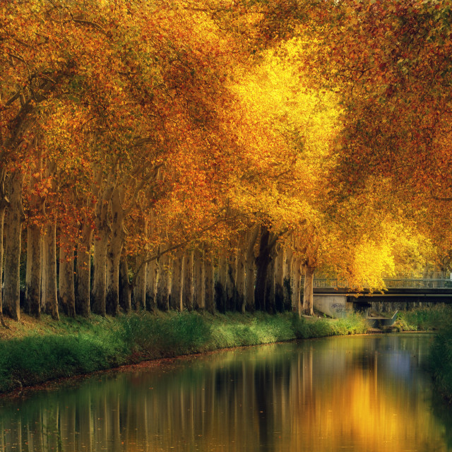 """""""Autumn at Canal du Midi, Toulouse, France"""" stock image"""