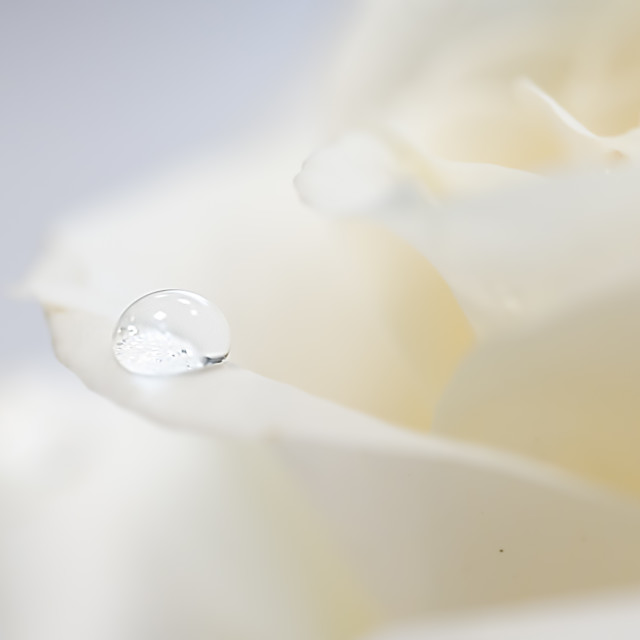 """""""A drop of dew"""" stock image"""