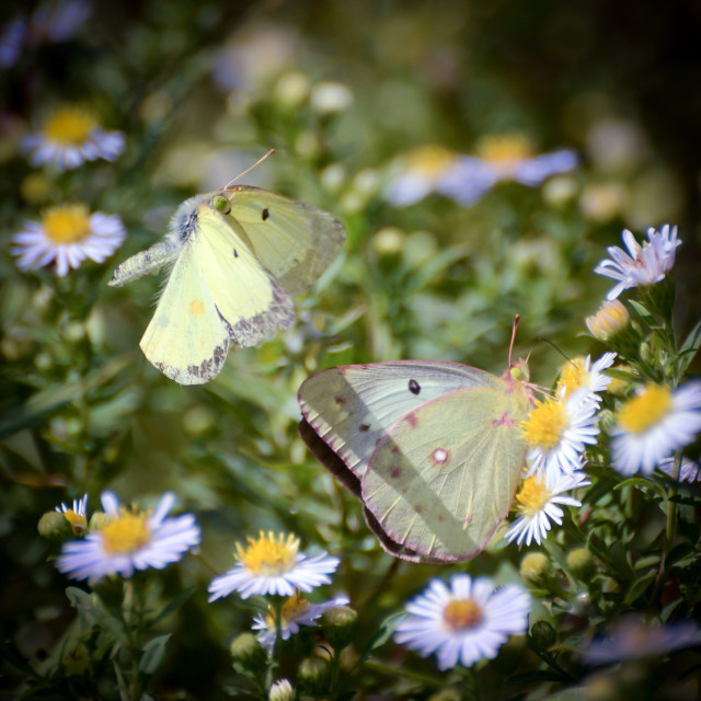 """Butterfly Moments"" stock image"