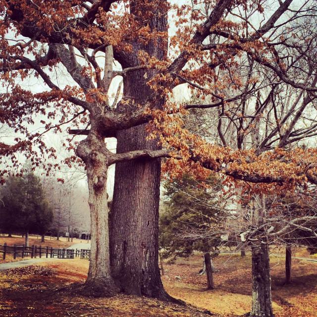 """Tree Hugging"" stock image"