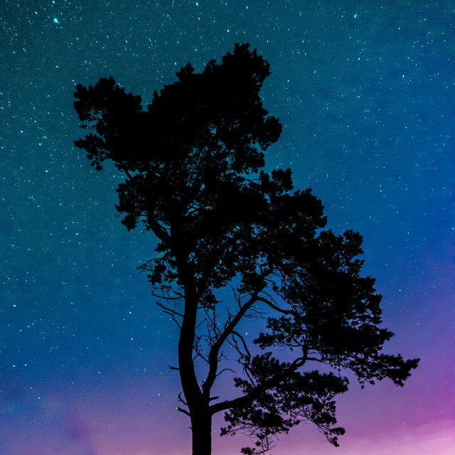 """""""Tree silhouette against the stars"""" stock image"""