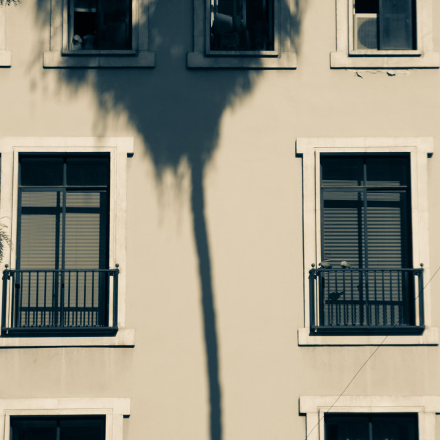 """Palm tree casts its shadow on a building"" stock image"