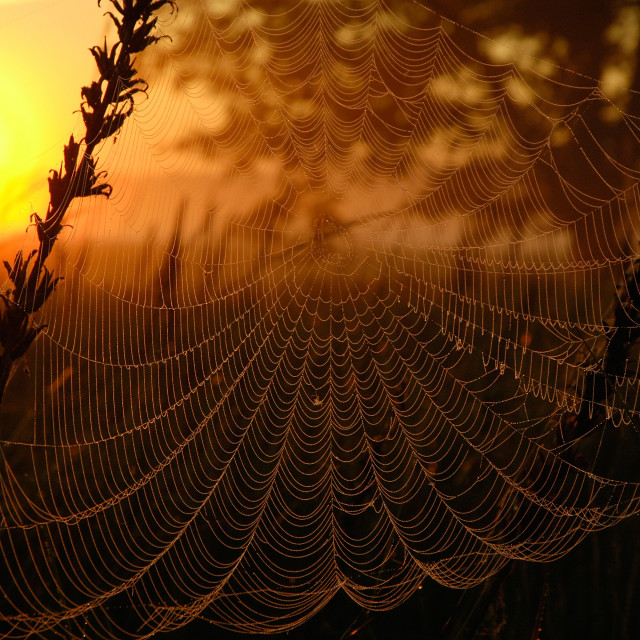 """""""Web in the light of the rising sun"""" stock image"""