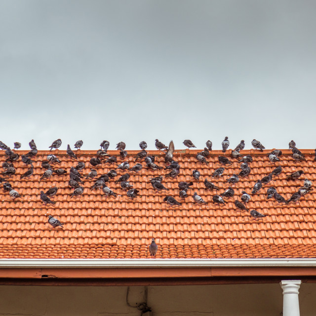 """Birds on a roof"" stock image"
