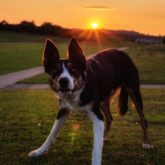 """Puppy Sun set"" stock image"