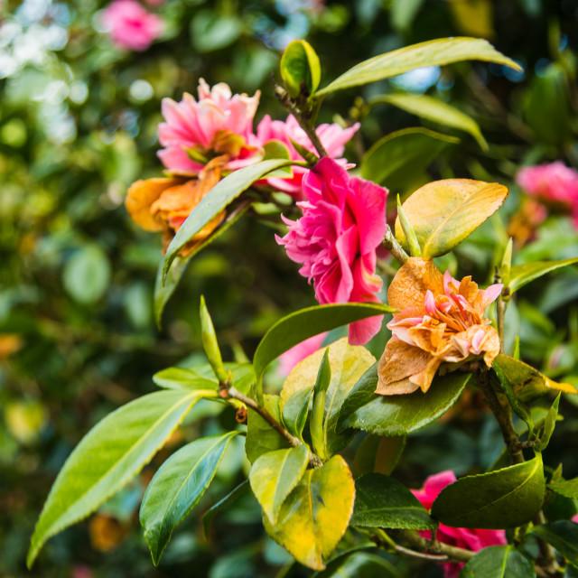 """Flowers in Bloom"" stock image"