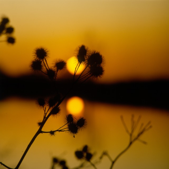 """Thistle sSunset"" stock image"