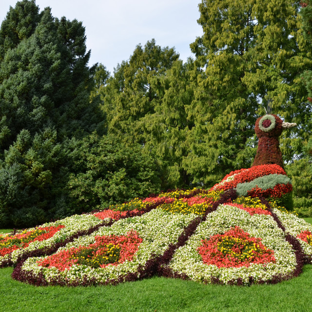 """Flower peacock sculpture. Mainau island, Germany"" stock image"