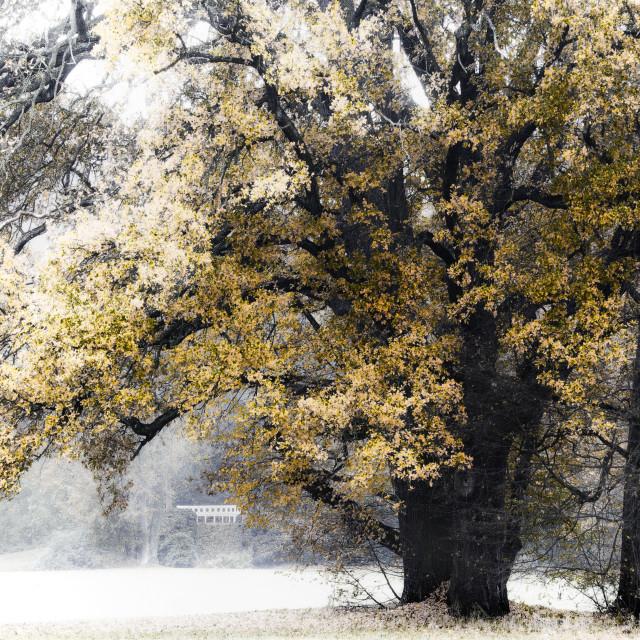 """golden autumn in park"" stock image"