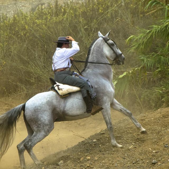 """Andalusian Romeria"" stock image"