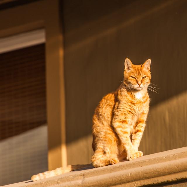 """Ginger cat on a window ledge"" stock image"