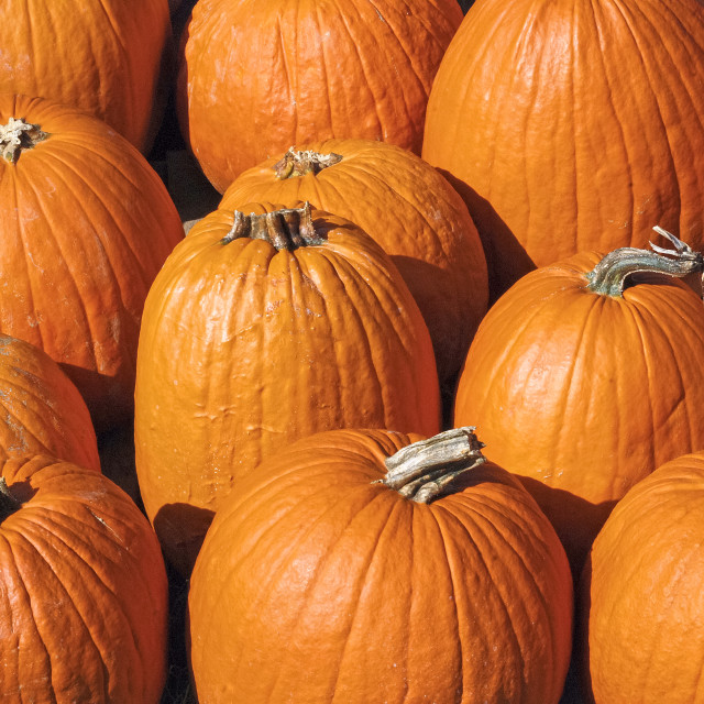 """Pumpkins"" stock image"