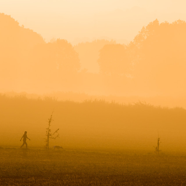"""Sunrise Fog Dog Walker"" stock image"