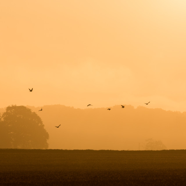 """Sunrise Birds (2)"" stock image"
